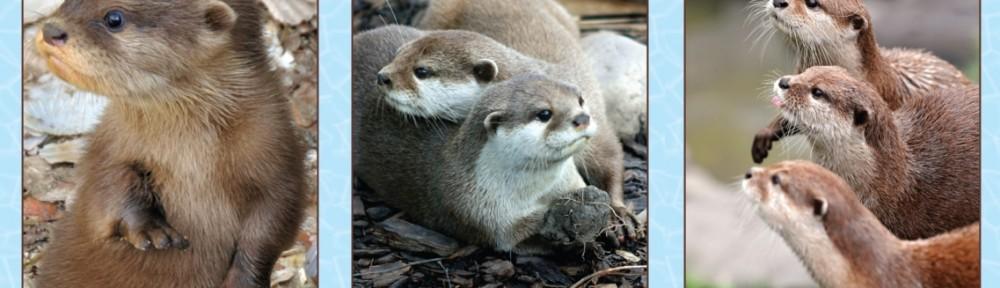 Otters 1-2-3 v1