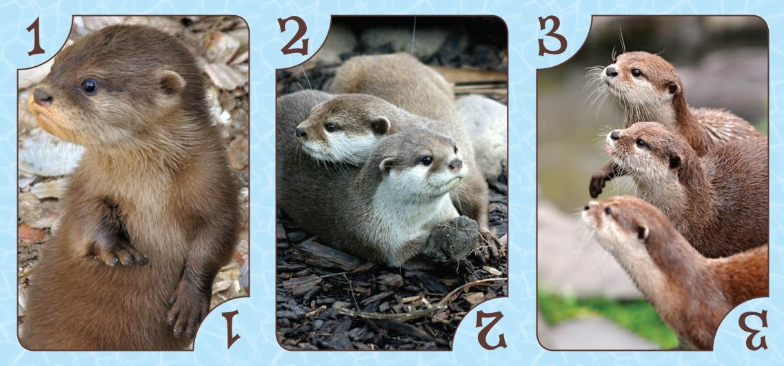 Three simple otter cards from Otters