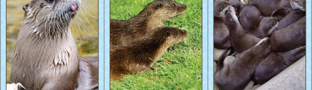 Otters Special 1